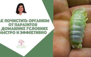 Как почистить организм от паразитов в домашних условиях